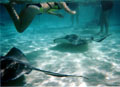 Snorkeling with the rays -Cayman Islands